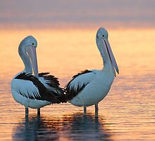 Pelican Sunset by Seesee