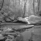 Lower Catawba Falls by Bill Wetmore