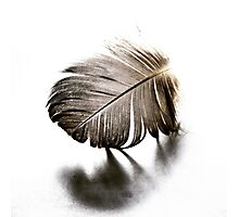 Feather Fracture Photographic Print