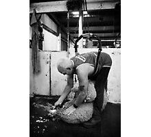 Shearing #12 ... Clifton Farm , Dumbleyung  Photographic Print