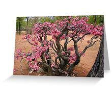 Impala Lily, Kruger National Park, South Africa Greeting Card