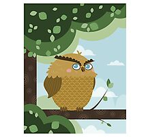 Owl in a branch Photographic Print