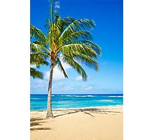 Palm trees on the sandy beach in Hawaii Photographic Print