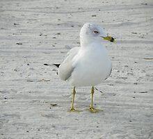 I Spy A Bird's Eye by alamarmie