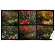 Umbrian Poppies Collage Poster