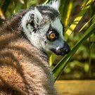 The Lemur Look by vivsworld