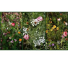 English Cottage Garden Collage 1 Photographic Print