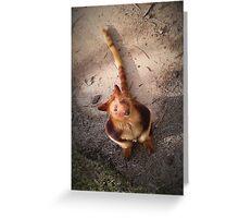 Australian Red Tree Kangaroo Greeting Card