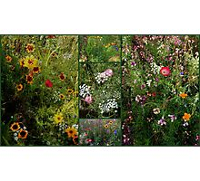 English Cottage Garden Collage 2 Photographic Print