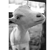 Goofy Goat Photographic Print