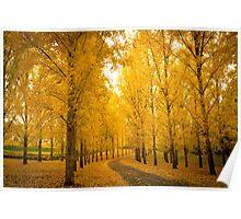 Autumn Colors - Landscape Poster