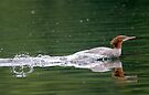 Smooooth Water Landing ! by Michael  Moss