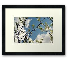 Growth / 1 Framed Print