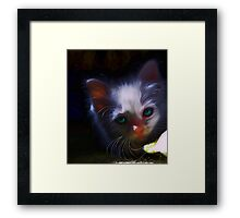 kitty Framed Print