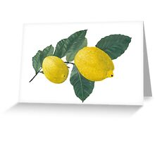 Oil painting of Two  Lemons and Leaves Greeting Card