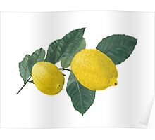 Oil painting of Two  Lemons and Leaves Poster