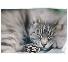 Sleepy kitty Poster