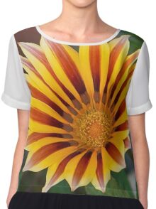 Single Flower Close Up Gazania Red Stripe Chiffon Top