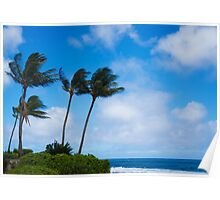Palm trees by the ocean Poster