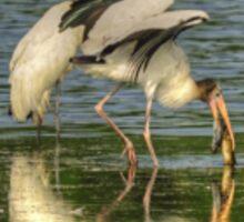Stork Grabs Huge EEL Sticker