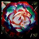 Colorburst rose by endomental Artistry