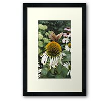 Butterfly, flower Framed Print
