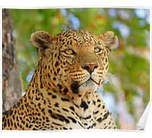 A delta leopard profile Poster