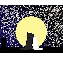 Abstract star's background with cats Photographic Print