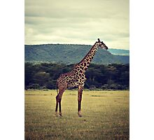 Stiff Sentinel ( Giraffe in Profile ) Photographic Print