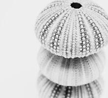 3 Sea Urchin by Bethany Helzer