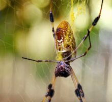 Yellow Garden Banana Spider female large Web mate  Sticker