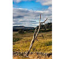 Bare Tree Photographic Print