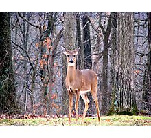 Who Dat Photographic Print