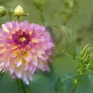 Garden Variety Dahlia by Lois  Bryan