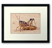 Grasshopper on Display Framed Print