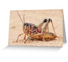 Grasshopper on Display Greeting Card