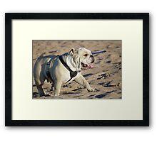 Beach Bulldog Framed Print
