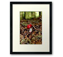 Red as a Radish  Framed Print
