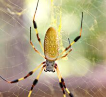Yellow Garden Banana Spider female large Arachnophobia  Sticker