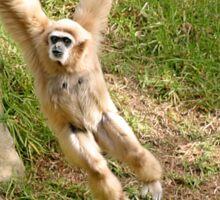 White Handed Gibbon Sticker