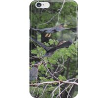 Green Herons in Flight iPhone Case/Skin