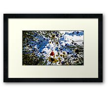 Garden Collection - Meadow flowers Framed Print