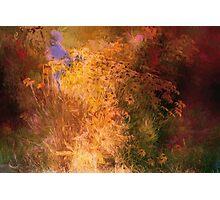 Fall Garden Party Photographic Print
