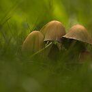 Mushrooms-1 by njumer