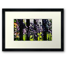 Garden Collection - Blue Bells Framed Print