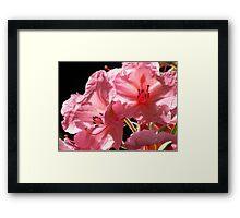 Pink Flowers Framed Print