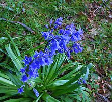 Woodland Bluebell by BlueMoonRose
