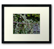 Draping Greenery    ^ Framed Print