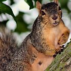 Pretty Squirrel by Keala