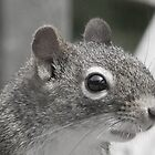 Squirrel in Black and White by Martha Medford